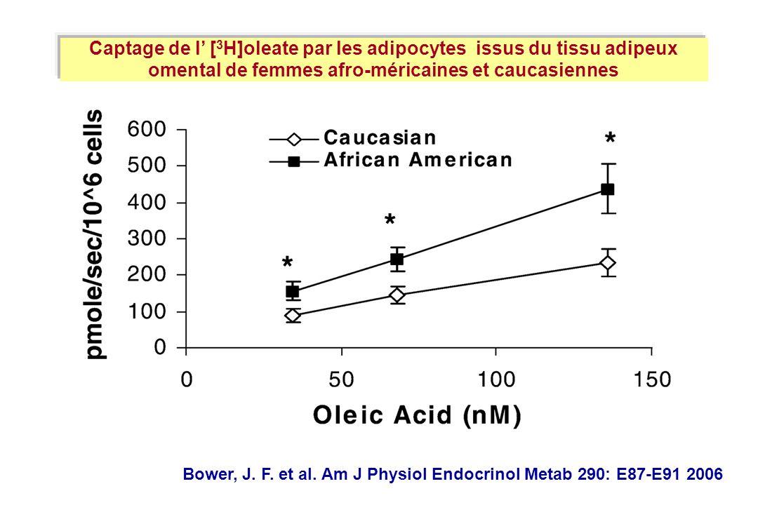 Captage de l' [3H]oleate par les adipocytes issus du tissu adipeux omental de femmes afro-méricaines et caucasiennes